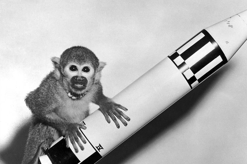 Geekerhertz,space race,cats,dog,orbit,science,space,sent to ,animals,First,news,